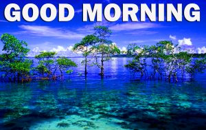 Gud Morning Pictures Images Wallpaper Photo Download For Facebook