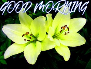 Gud Mrng Photo Pictures Wallpaper Images Free HD