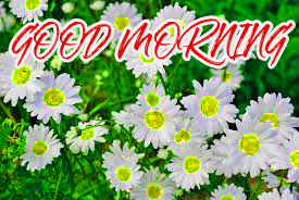 Gud Mrng Wallpaper Images Photo Pictures HD Download