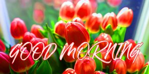 Gud Mrng Pictures Images Photo Wallpaper HD