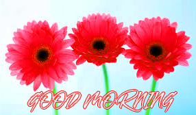Gud Mrng Pictures Images Photo Wallpaper For Facebook