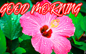 Gud Mrng Photo Images Pictures Wallpaper Download