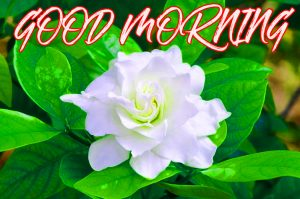 Gud Mrng Pictures Images Photo Wallpaper For Whatsapp