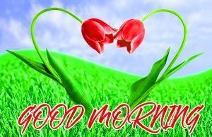 Gud Mrng Pictures Images Photo Wallpaper HD Download