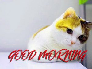 Gud Mrng Photo Images Pictures Wallpaper Free HD