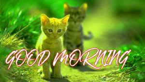 Gud Mrng Wallpaper Images Pictures Photo Free HD