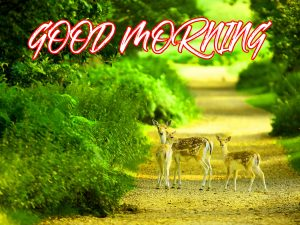 Gud Mrng Wallpaper Images Pictures Photo HD Download For Facebook