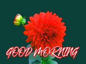 Gud Mrng Photo Images Pictures Wallpaper Download For Whatsapp