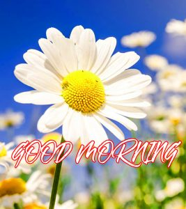 Gud Mrng Wallpaper Photo Images Pictures Download