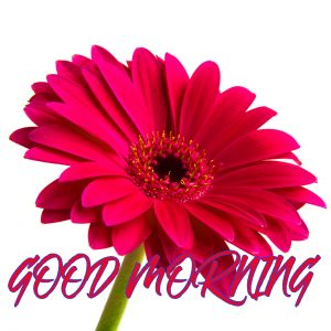 Gud Mrng Photo Images Pictures Wallpaper For Whatsapp
