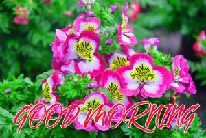 Gud Mrng Wallpaper Photo Images Pictures HD Download
