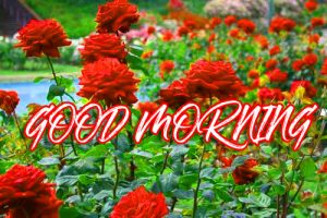 Gud Mrng Wallpaper Images Photo Pictures HD Download For Facebook