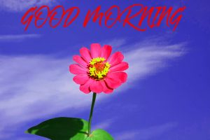 Gud Mrng Wallpaper Images Pictures Photo Download