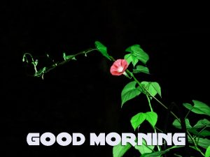 Latest Good Morning Photo Images Pics Free HD