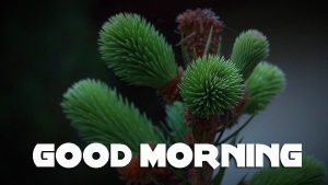 Latest Good Morning Pictures Photo Images Download