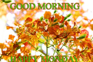 Monday Good Morning Photo Images Wallpaper HD Download