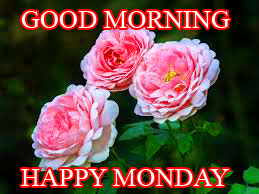 Monday Good Morning Photo Images Wallpaper Download