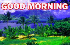 Nature Gud Morning Photo Images Pictures Download