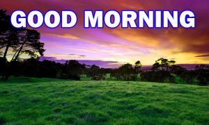 Nature Gud Morning Pictures Images Photo HD Download