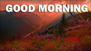 Nature Gud Morning Wallpaper Photo Images Download For Whatsapp