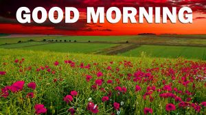 Nature Gud Morning Images Pictures Photo HD For Facebook