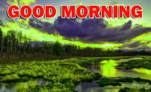 Nature Gud Morning Photo Images Pictures Free HD