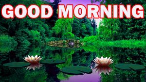 Nature Gud Morning Photo Pictures Images Download For Facebook