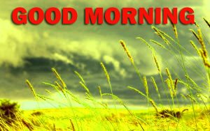 Nature Gud Morning Wallpaper Photo Images HD For Boyfriend