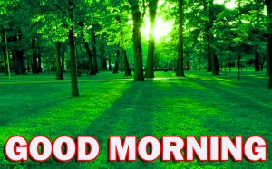 Nature Gud Morning Wallpaper Photo Pictures HD For Boyfriend
