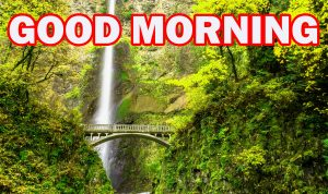 Nature Gud Morning Pictures Images Photo Download For Whatsapp