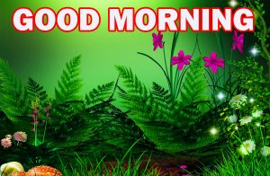 Nature Gud Morning Wallpaper Photo Images HD Download