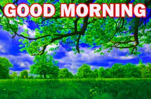 Nature Gud Morning Wallpaper Photo Images HD