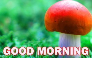 Nature Gud Morning Photo Images Pictures HD