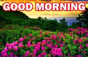 Nature Gud Morning Photo Images Pics Download