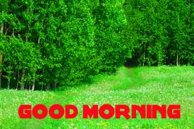 Nature Good Morning Images Photo Pics Free Download for Whatsaap