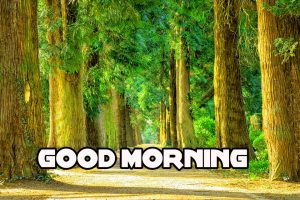Good Morning Images Wallpaper Pics HD Download With Nature