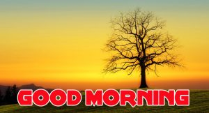 Nature Good Morning Images Photo HD Download