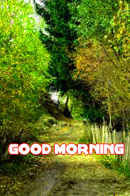 Nature Good Morning Images Wallpaper Pics Download for Whatsaap