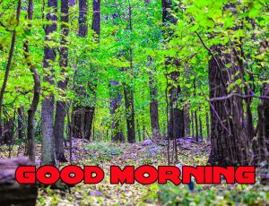 Nature Good Morning Images Wallpaper Photo Pics Download