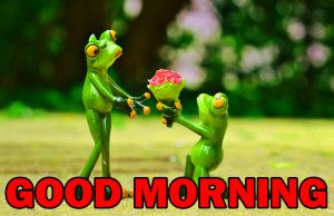 Special Good Morning Pictures Images Photo HD For Whatsapp