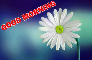 Special Good Morning Pictures Images Photo Download For Facebook