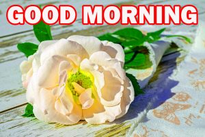 Special Good Morning Pictures Images Photo Download With Flower