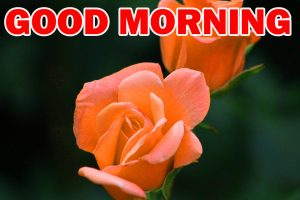 Special Good Morning Photo Images Pictures Free HD
