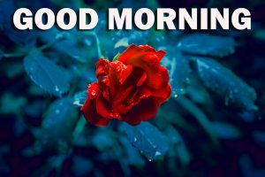 Special Good Morning Pictures Images Photo HD With Flower
