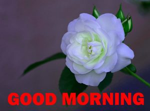 Special Good Morning Photo Images Wallpaper Download