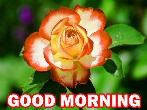 Special Good Morning Pictures Photo Wallpaper For Facebook