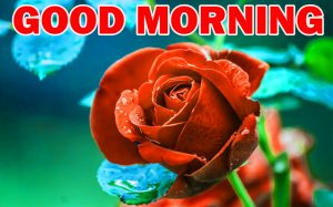 Special Good Morning Photo Images Pictures HD With Flower