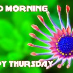 556+ Thursday Good Morning Wishes Images Pictures Download