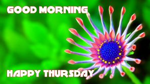 Thursday Good Morning Pictures Photo Images HD Download