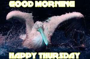 Thursday Good Morning Pictures Images Photo Download For Facebook